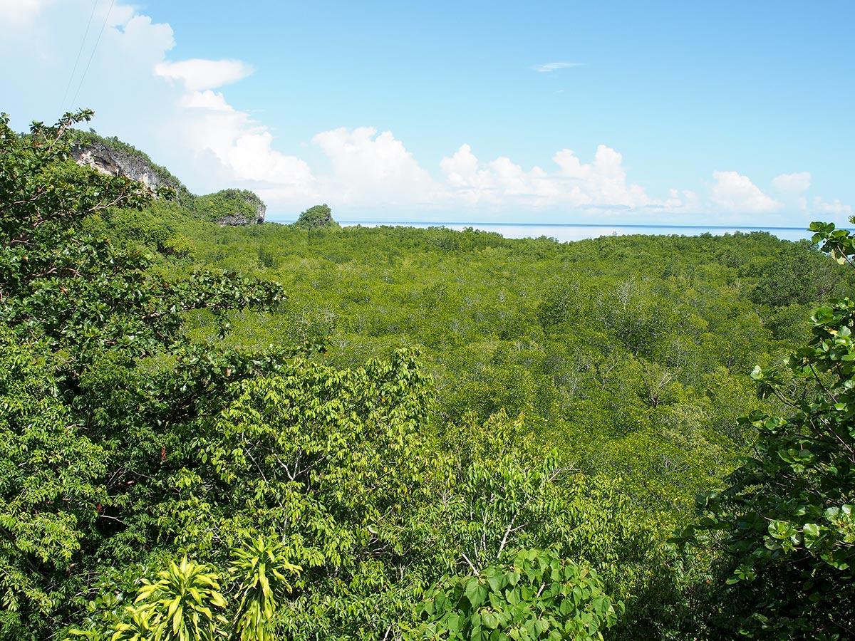 Blick auf den Mangrovenwald
