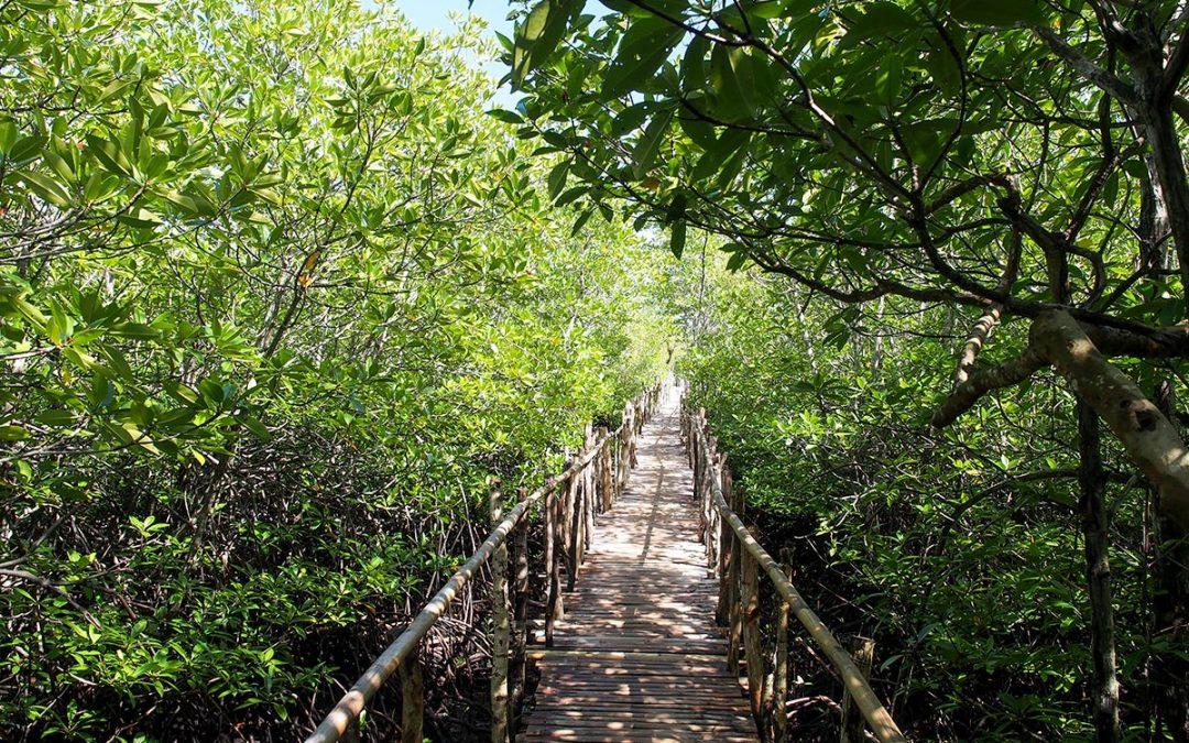 Lamanok Island – Mystische Kultur