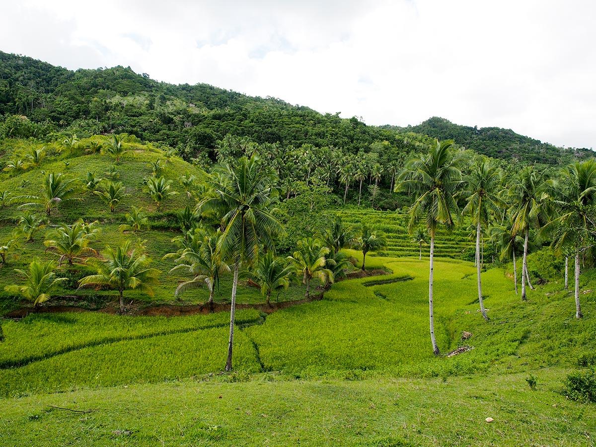 Reisterrassen auf dem Heimweg