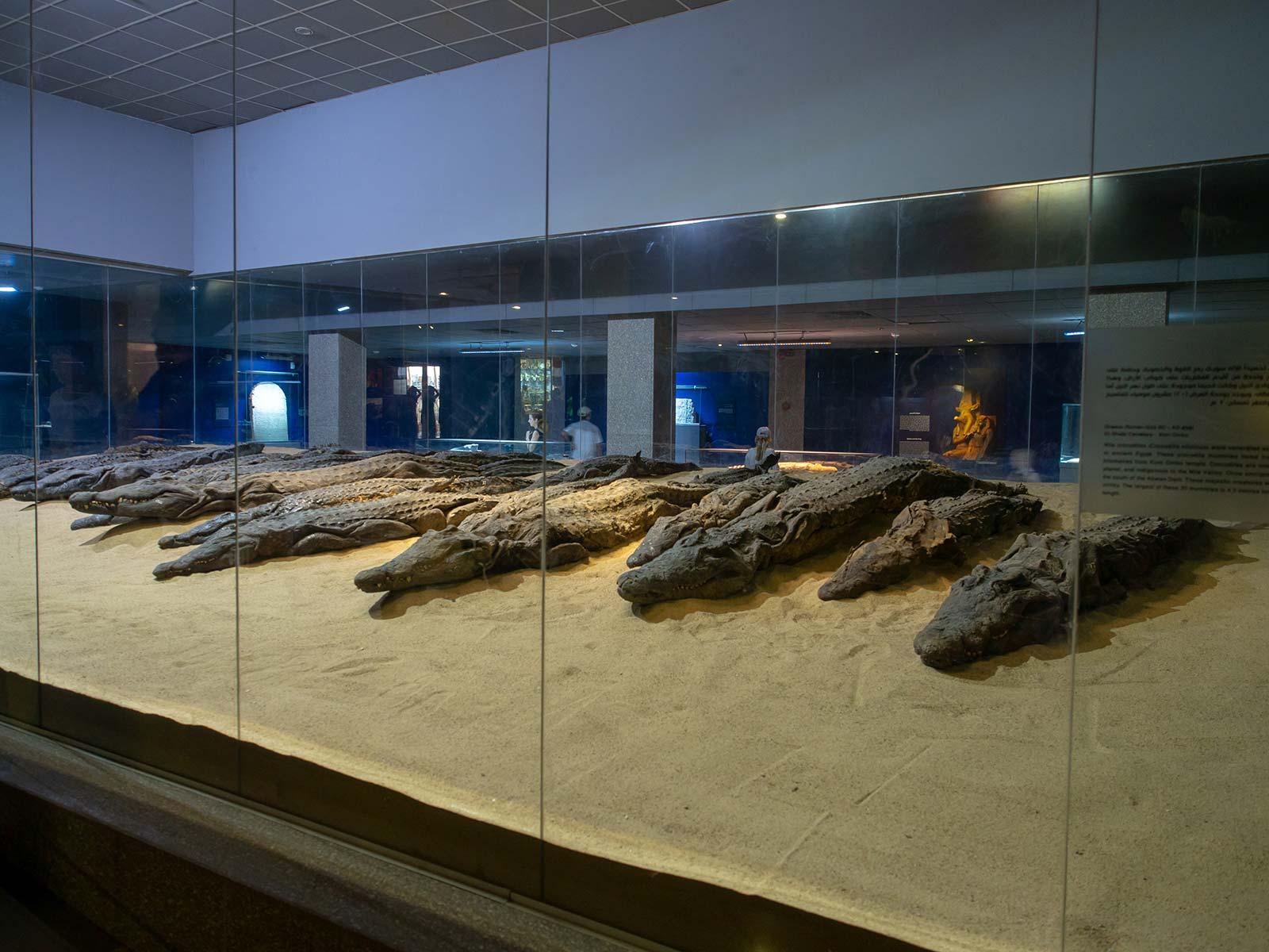 Mumifizierte Krokodile in Kom Ombo