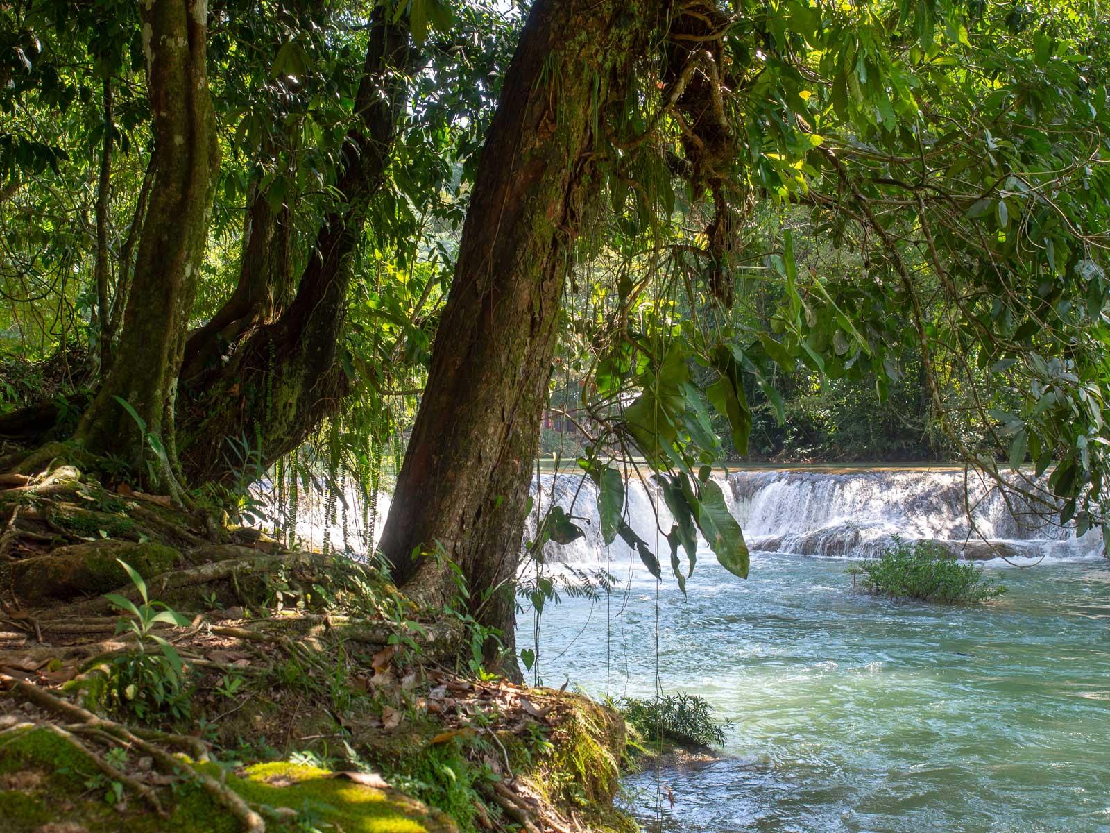 Tropische Vegetation Agua Azul