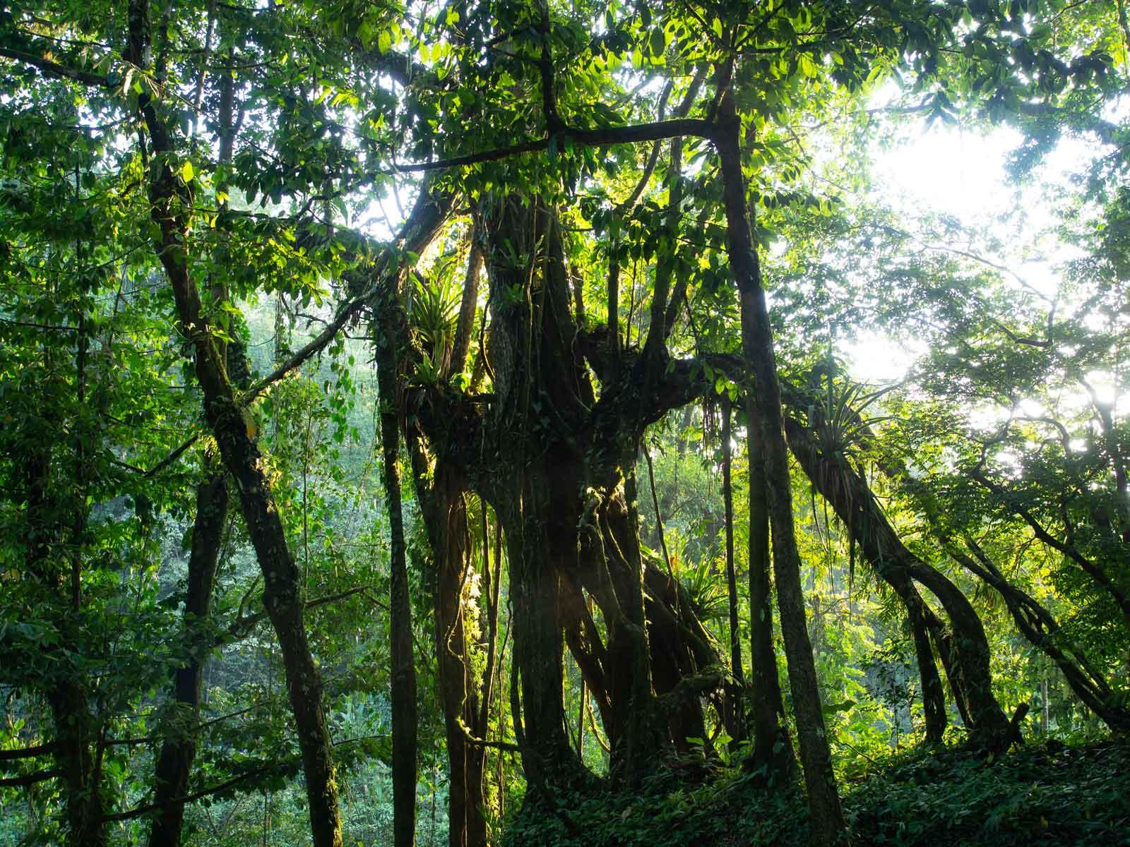 Dschungel Vegetation beim Misol-Ha Wasserfall
