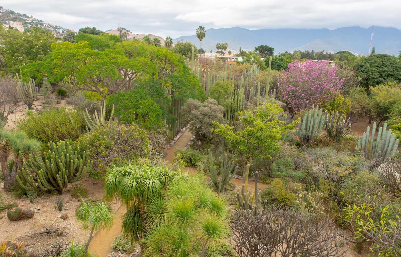 Oaxaca botanischer Garten ardín Etnobotánico